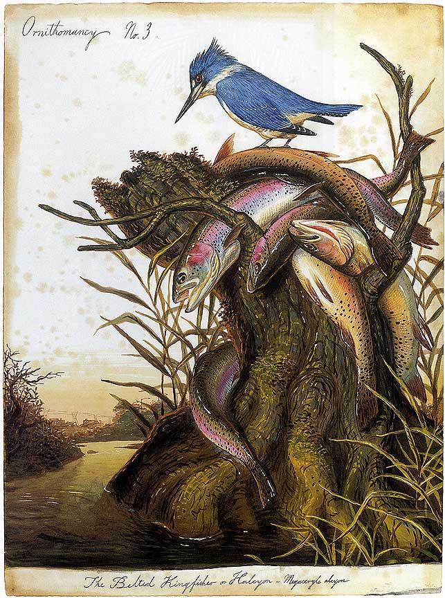 2002 National Audubon Society Field Guide to Birds Eastern Region North America